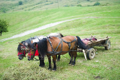 Cavalos e carro Imagens de Stock Royalty Free