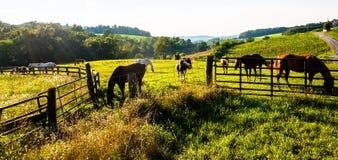 Cavalos e cercas em um campo de exploração agrícola no Condado de York, Pensilvânia Imagem de Stock