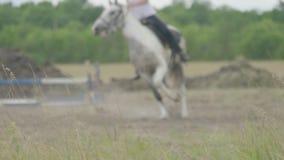 Cavalos e jóqueis de raça que saltam sobre um obstáculo Efeito do borr?o vídeos de arquivo