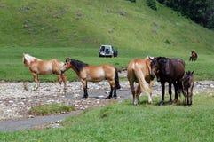 Cavalos e natureza imagem de stock