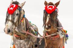 Cavalos e paisagem do inverno Fotos de Stock Royalty Free
