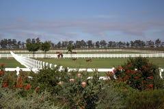 Cavalos e potros Fotografia de Stock Royalty Free