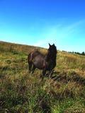 Cavalos e seres humanos Imagem de Stock Royalty Free
