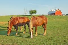 Cavalos e um celeiro Fotos de Stock