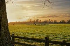 Cavalos em Autumn Sunset imagem de stock royalty free