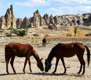 Cavalos em Cappadocia   Fotografia de Stock Royalty Free