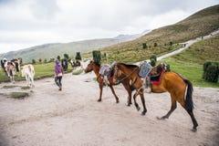 Cavalos em Equador Imagem de Stock Royalty Free