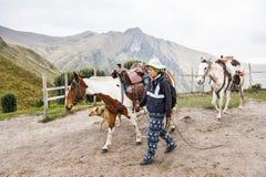 Cavalos em Equador Imagem de Stock