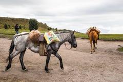 Cavalos em Equador Imagens de Stock