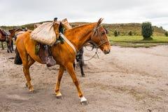 Cavalos em Equador Foto de Stock