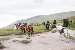 Cavalos em Equador Fotografia de Stock