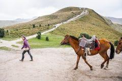 Cavalos em Equador Fotografia de Stock Royalty Free