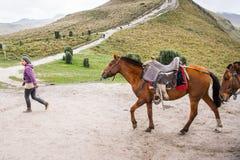 Cavalos em Equador Fotos de Stock
