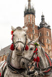 Cavalos em Krakow Imagens de Stock