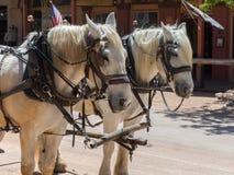 Cavalos em Main Street, lápide, o Arizona fotografia de stock royalty free