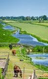 Cavalos em um campo Fotografia de Stock Royalty Free