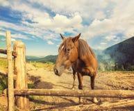 Cavalos em um pasto Fotos de Stock