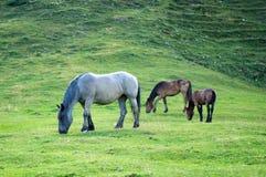 Cavalos em um pasto da montanha Fotos de Stock