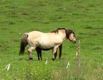 Cavalos em um prado fotografia de stock