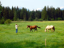 Cavalos em um rancho em idaho Fotografia de Stock Royalty Free
