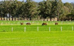 Cavalos em uma exploração agrícola de parafuso prisioneiro - Austrália fotos de stock royalty free
