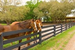 Cavalos em uma exploração agrícola do treinamento no ocala Foto de Stock
