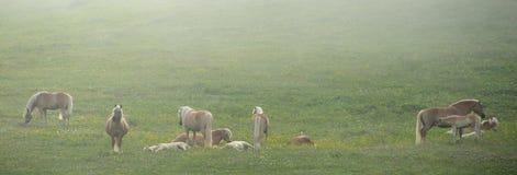 Cavalos em uma névoa Fotografia de Stock Royalty Free