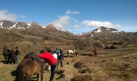 Cavalos islandêses em um corte para fora fotos de stock royalty free