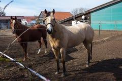 cavalos marrons e brancos em um prado quando o sol brilhar fotos de stock