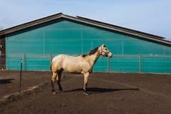 cavalos marrons e brancos em um prado quando o sol brilhar fotografia de stock royalty free