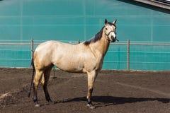 cavalos marrons e brancos em um prado quando o sol brilhar foto de stock royalty free