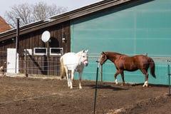 cavalos marrons e brancos em um prado quando o sol brilhar fotografia de stock