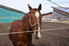 cavalos marrons e brancos em um prado quando o sol brilhar imagens de stock royalty free