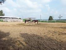 2 cavalos marrons na exploração agrícola fotografia de stock royalty free