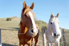 Cavalos a montar Fotografia de Stock