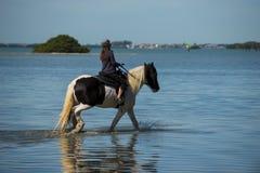 Cavalos na água com reflexão Imagem de Stock