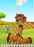 Cavalos na cena da exploração agrícola ilustração royalty free