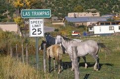 Cavalos na estrada nacional a Taos, nanômetro fotografia de stock