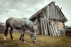 Cavalos na exploração agrícola Fotos de Stock Royalty Free