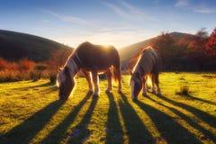 Cavalos na montanha fotografia de stock royalty free