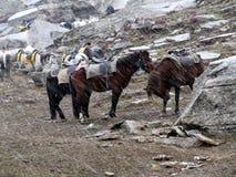 cavalos na neve Imagens de Stock Royalty Free
