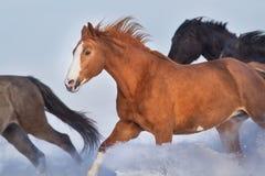 Cavalos na neve do inverno fotografia de stock royalty free