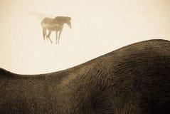 Cavalos na neve e na névoa foto de stock royalty free