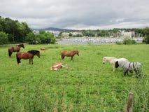 Cavalos na península de Bygdøy, Oslo foto de stock royalty free