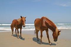 Cavalos na praia Imagens de Stock Royalty Free