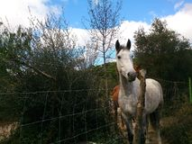 cavalos nas madeiras Foto de Stock Royalty Free