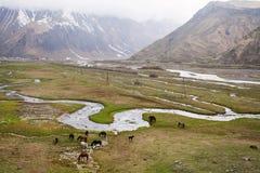 Cavalos nas montanhas Fotos de Stock