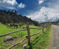 Cavalos nas montanhas e na cerca Imagem de Stock