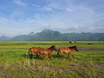 Cavalos no campo na maneira ao vulcão de Pinatubo Curso no Cl fotografia de stock royalty free