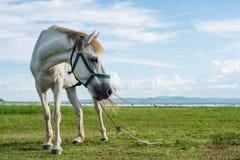 Cavalos no campo na represa de Krasiao Província de Suphanburi, Foto de Stock